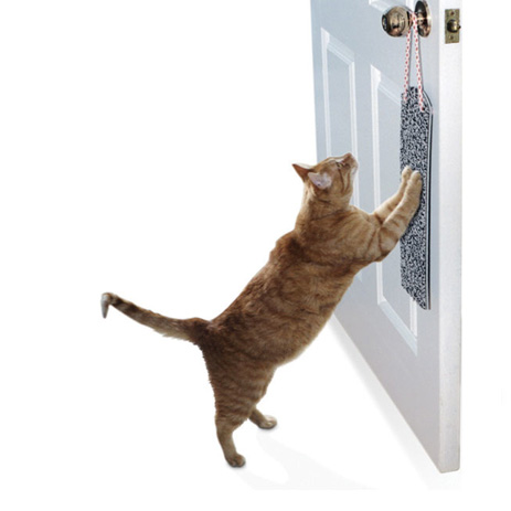 خرید اسکراچر گربه